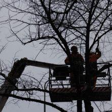 Tekunkadulta, Sammonkadulta ja Teiskontieltä poistetaan puita raitiotietöitä varten