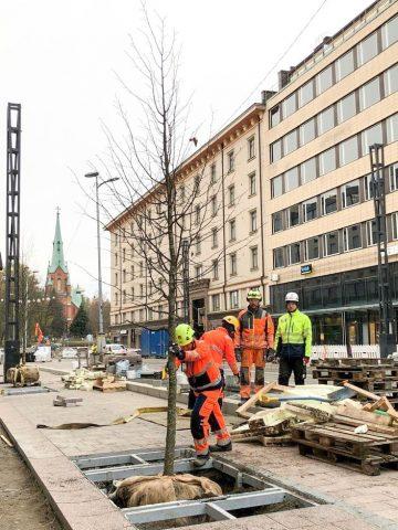 Hämeenkadun ensimmäisten uusien katupuiden istutus Tuulensuussa 5.11.